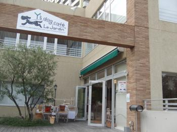 Y's dog cafe