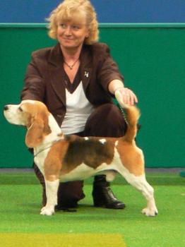 beaglefinalist.jpg