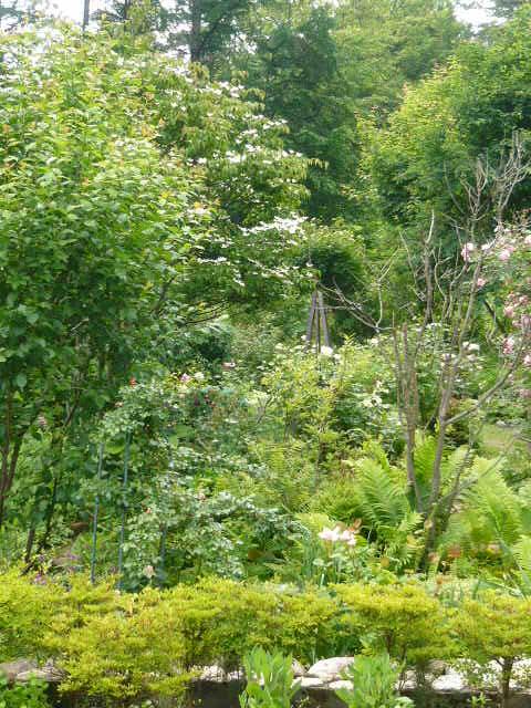 安曇野2008.6月南の庭