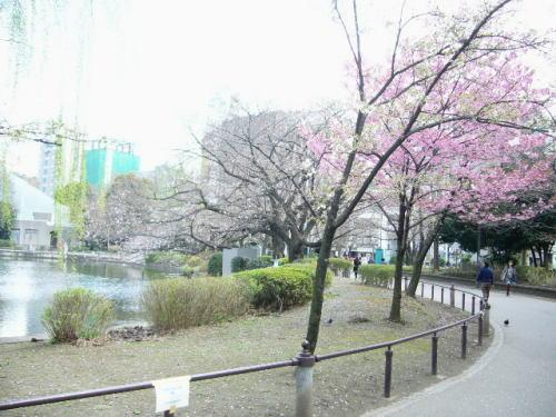 3月24日不忍池の桜