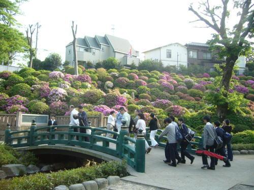 根津神社・つつじまつり2
