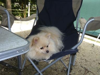 僕の専用椅子