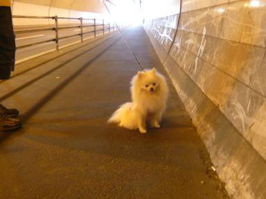 トンネル克服