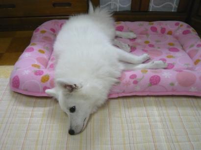 このベッド小さいでしゅ