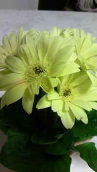 黄色花2110331