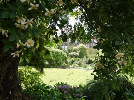 Chelsea Physic Garden Ⅲ