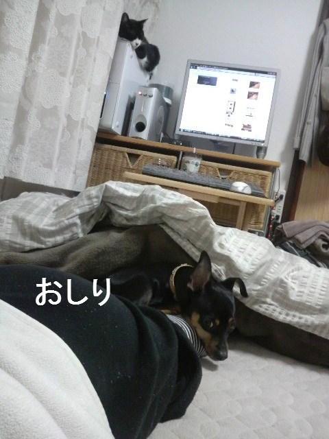 20100203 (6)ーおしり