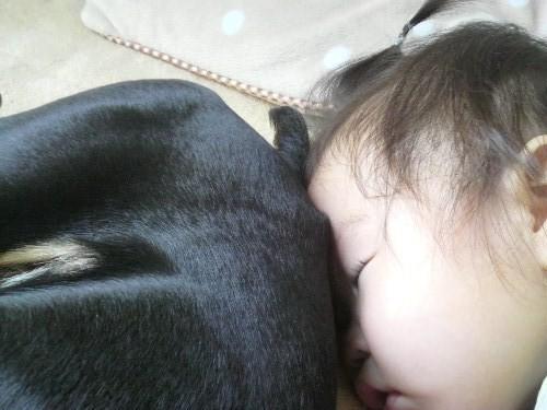 3匹の昼寝2