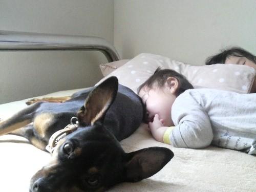 3匹の昼寝3