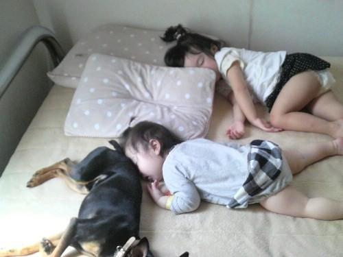 3匹の昼寝
