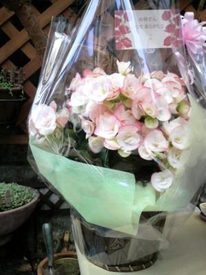 母の日の花1
