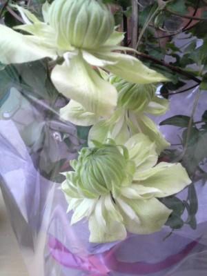 母の日の花3