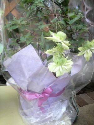 母の日の花2