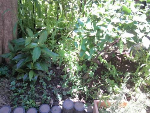 雑草だらけの庭6