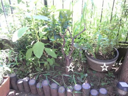 雑草だらけの庭3