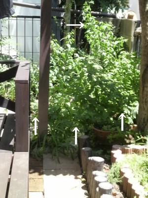 雑草だらけの庭4