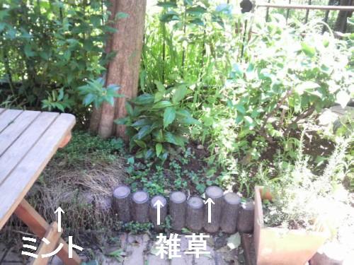 雑草だらけの庭2