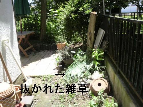 雑草だらけの庭1
