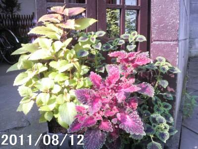 20110812-10.jpg