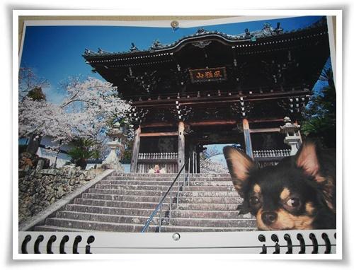有名寺の桜とオレ