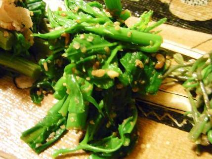 10-5-26 山菜うこぎ