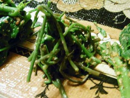 10-5-26 山菜あけびの新芽