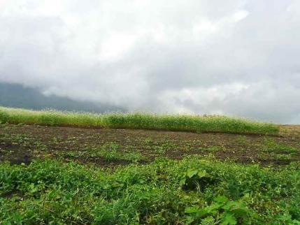 10-9-3 蕎麦畑