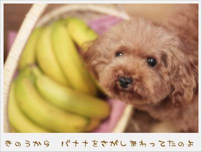 貴重なバナナ