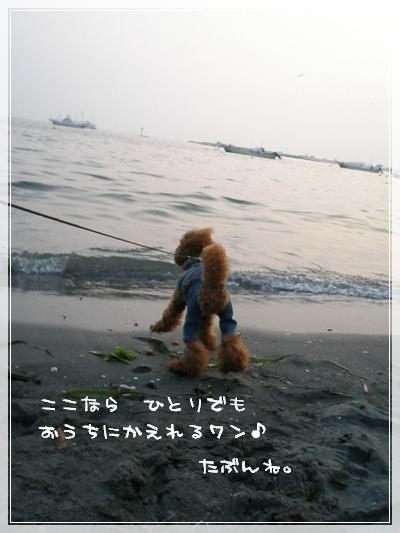 海を走るのは ボク?