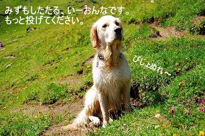 DSC_0715a.jpg
