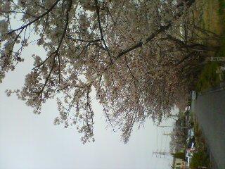 7G nagoya sakura@sadamu home