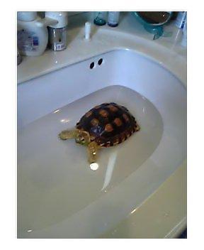 ゴン太の入浴