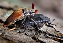 昆虫達の絡みっぷり