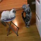 冷蔵庫の中身をおねだりする猫