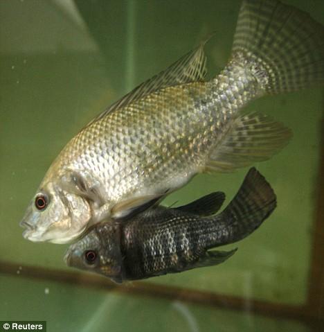 twins-fish02