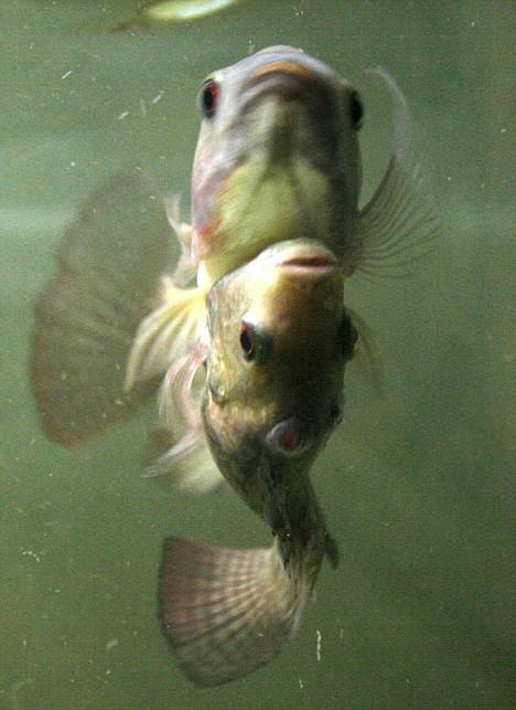 twins-fish03