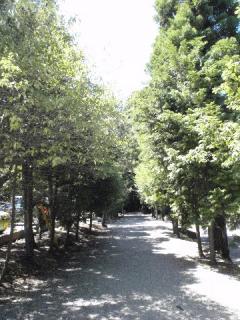2010_08290082.jpg