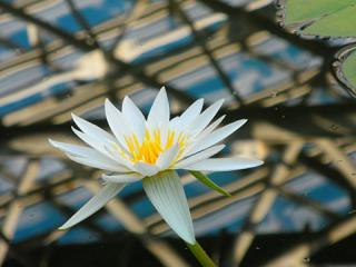 2011_01060134.jpg