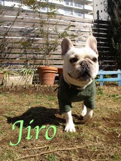 Pjiro1.jpg