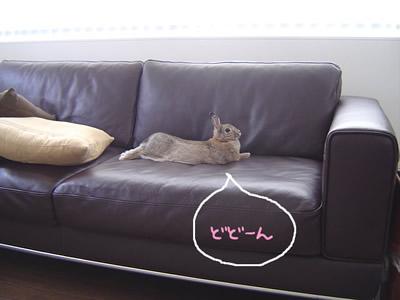 ソファの正しい使い方。