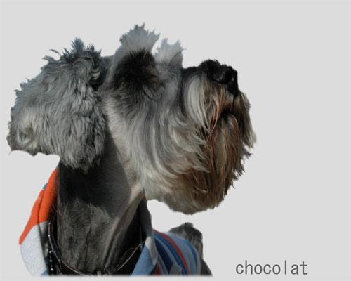 choco_yoko