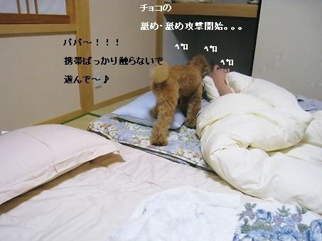 睡眠の邪魔をします・・・