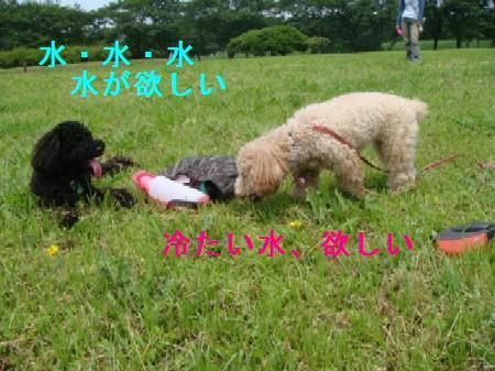 akigase4.jpg