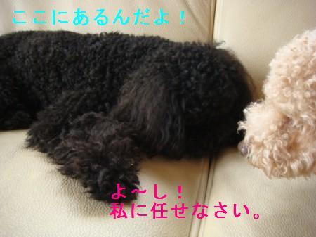 mamoritai2.jpg