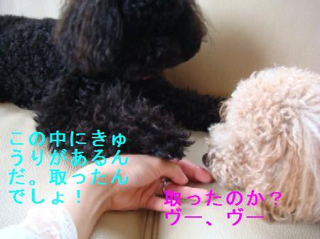 mamoritai4.jpg