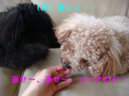 mamoritai5.jpg