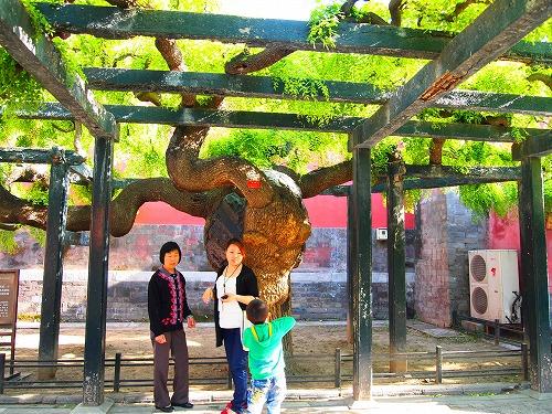 2011china 225