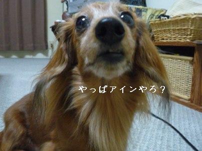 画像 081blog