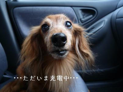 P1040501blog.jpg