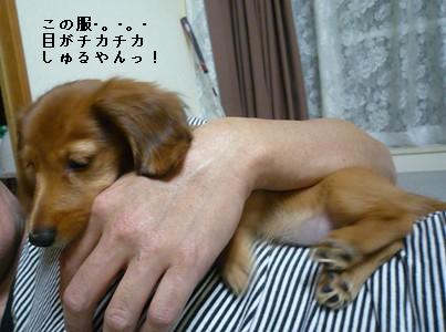P1050130blog.jpg